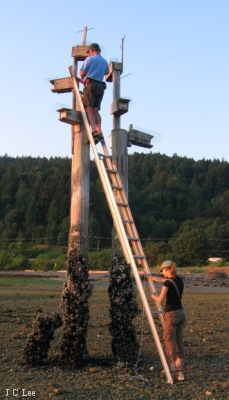 Nest box check at Nanoose Harbour